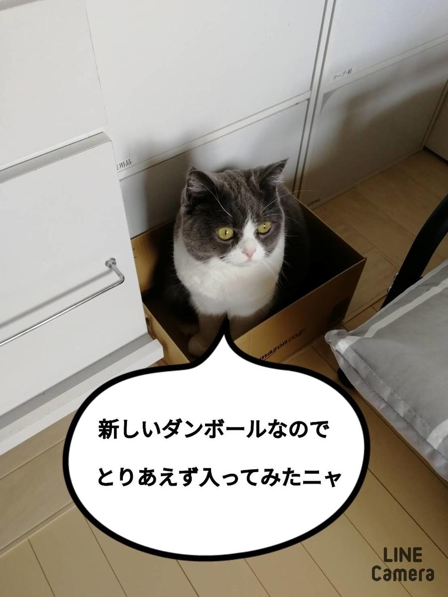f:id:kotubutubu3253:20200117010944j:plain