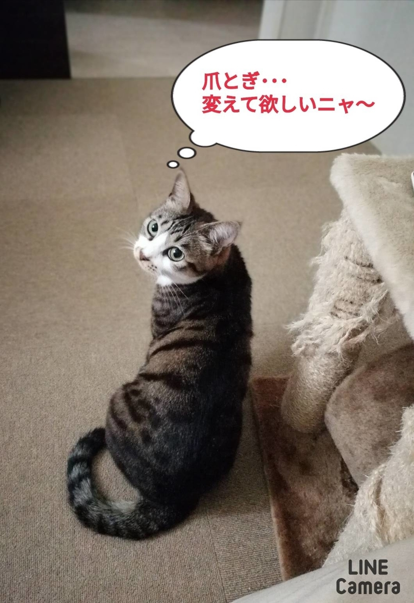 f:id:kotubutubu3253:20200121214604j:plain