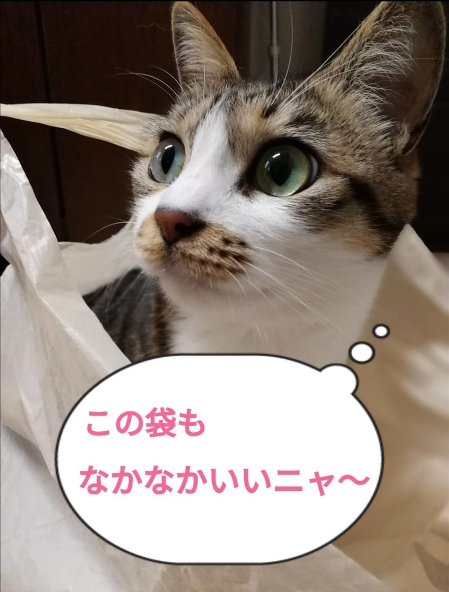 f:id:kotubutubu3253:20200127224111j:plain