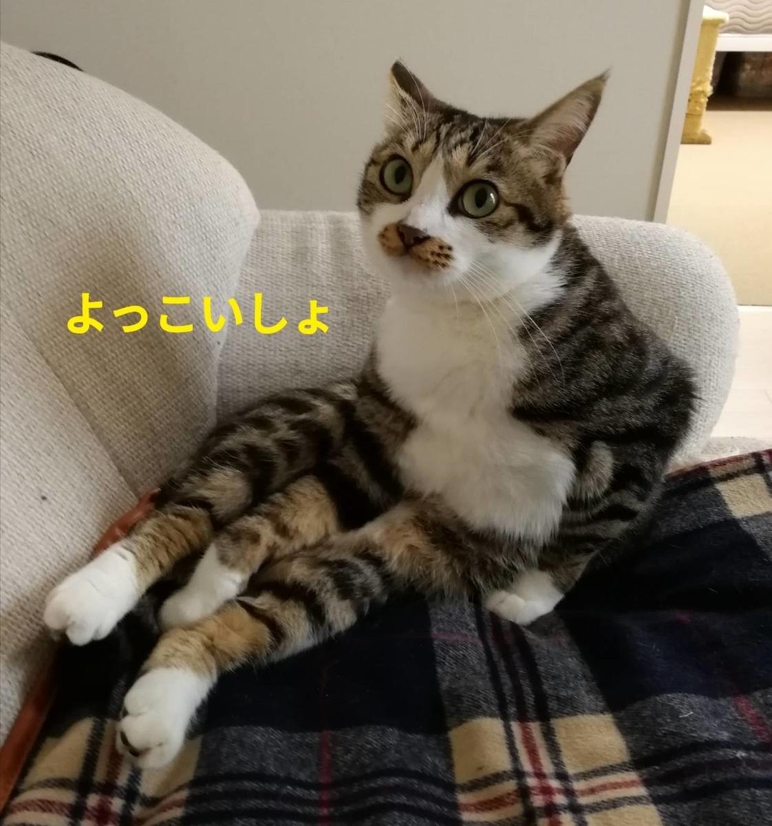 f:id:kotubutubu3253:20200306231224j:plain
