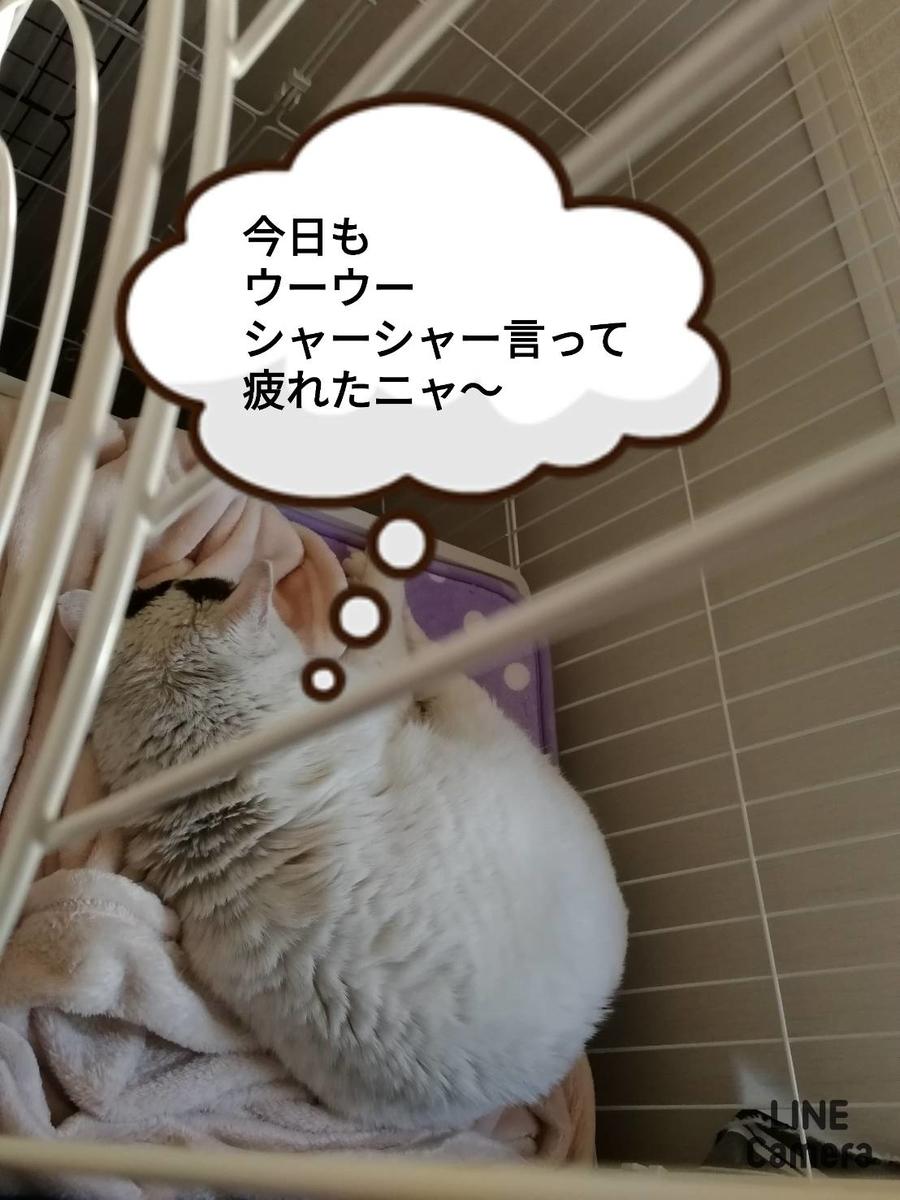f:id:kotubutubu3253:20200310041239j:plain