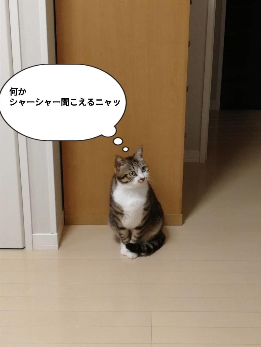 f:id:kotubutubu3253:20200310234004j:plain