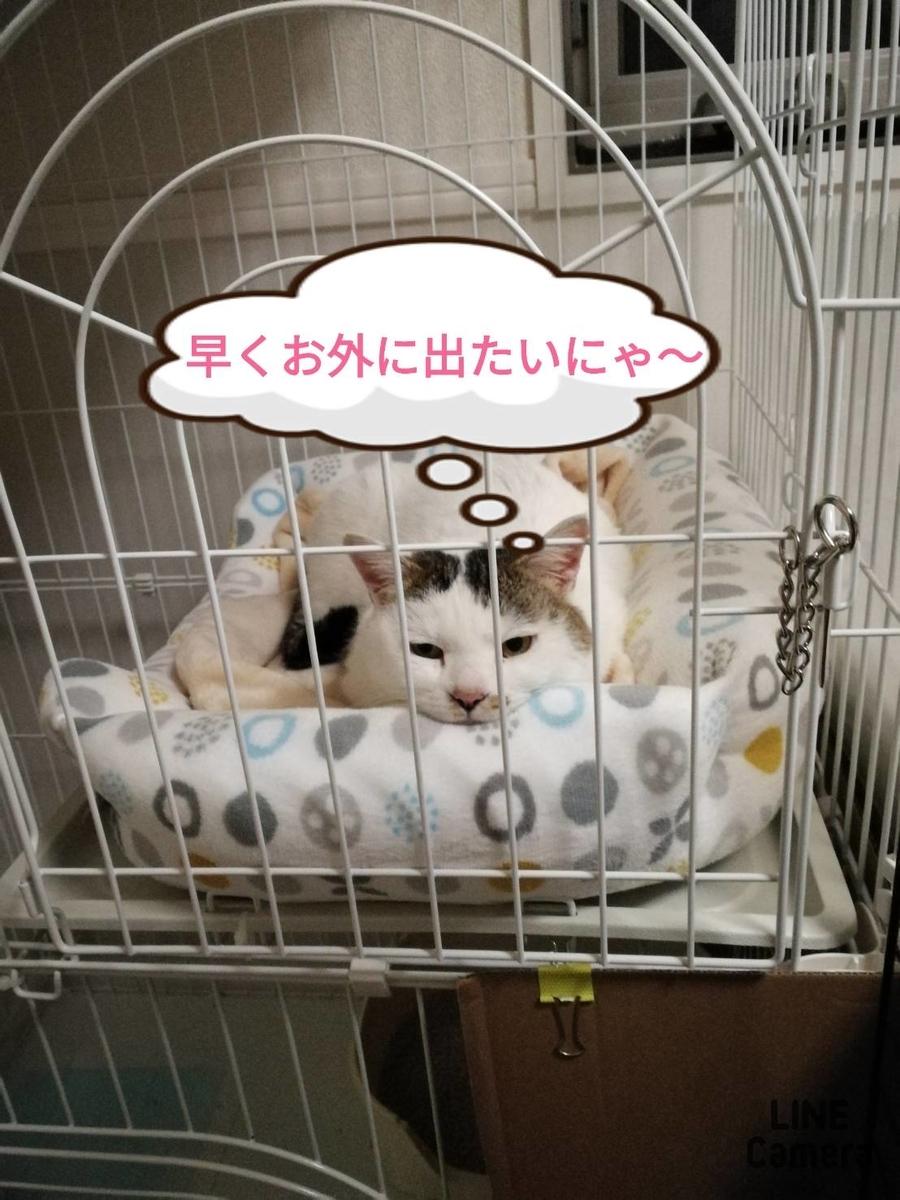 f:id:kotubutubu3253:20200316060729j:plain