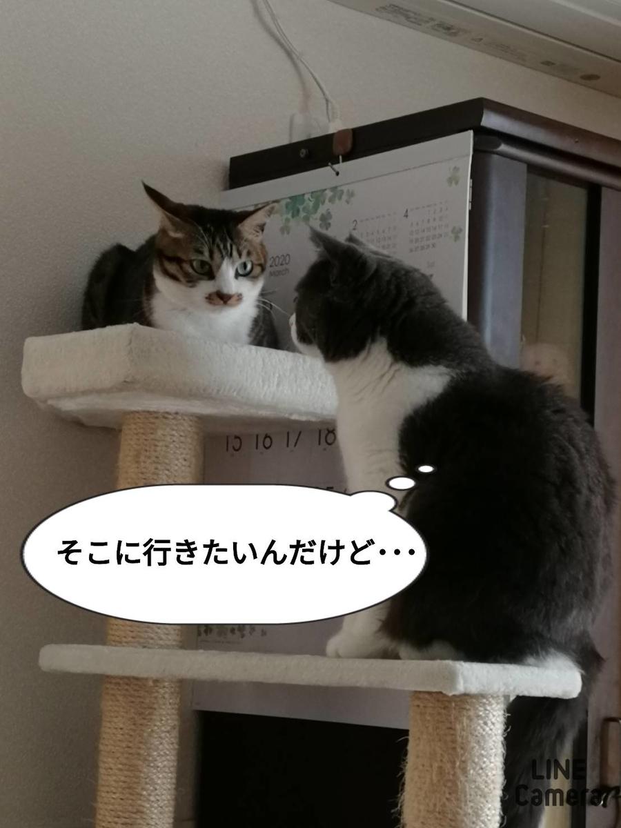 f:id:kotubutubu3253:20200324232719j:plain