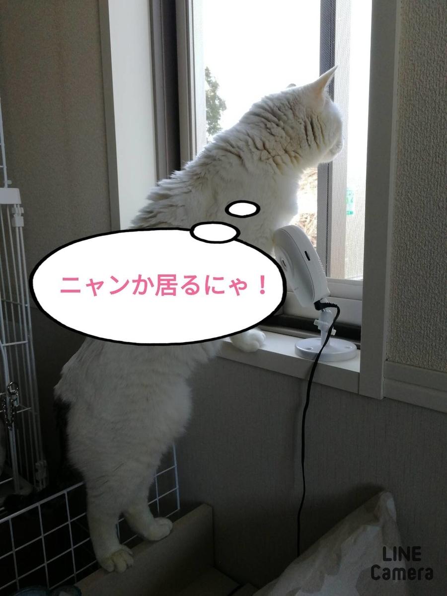 f:id:kotubutubu3253:20200330231124j:plain