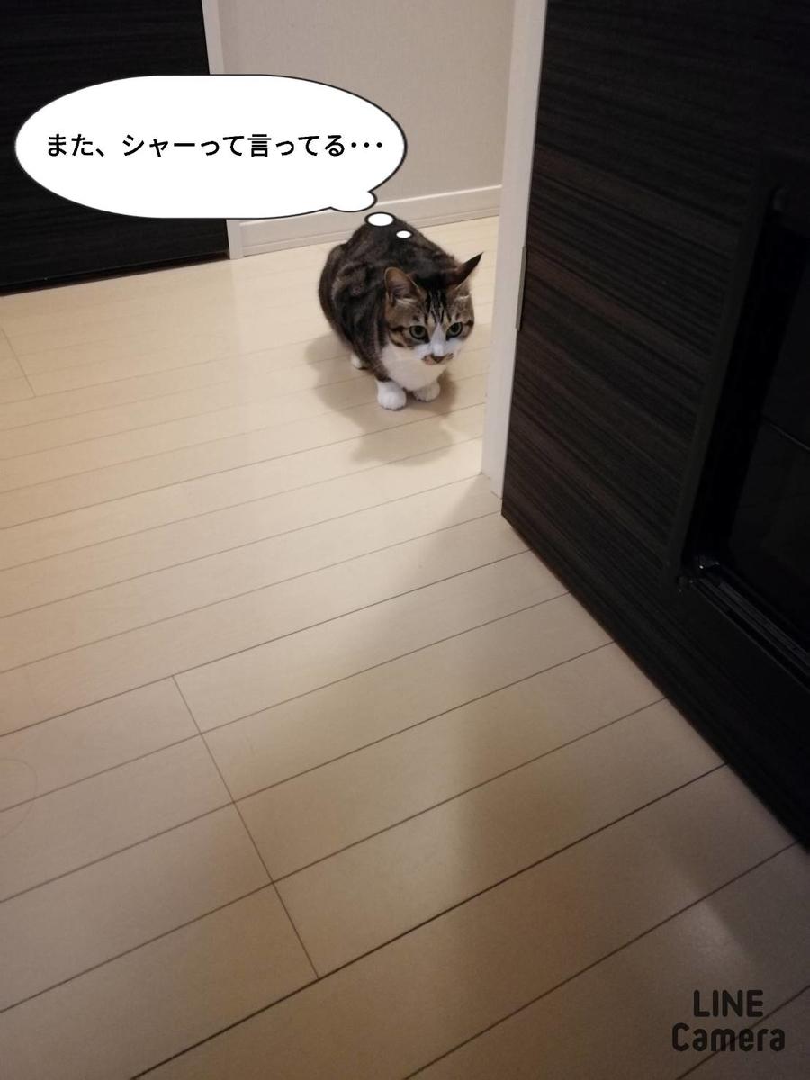 f:id:kotubutubu3253:20200401064936j:plain