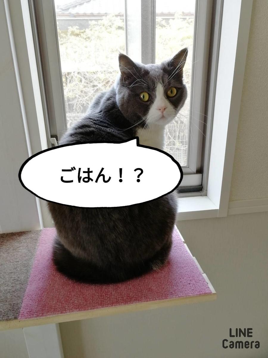 f:id:kotubutubu3253:20200414072916j:plain