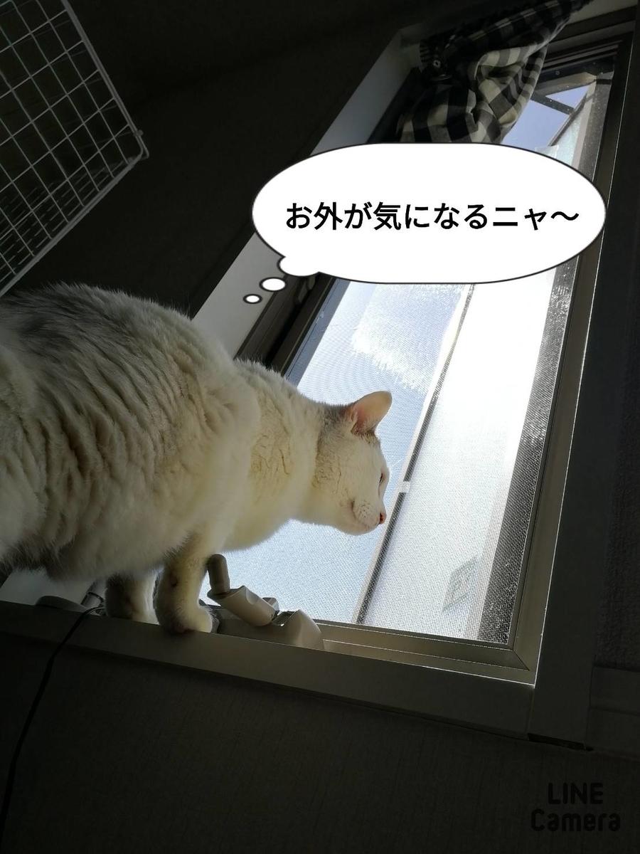 f:id:kotubutubu3253:20200420064548j:plain
