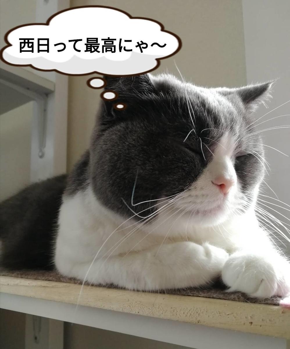 f:id:kotubutubu3253:20200422084008j:plain