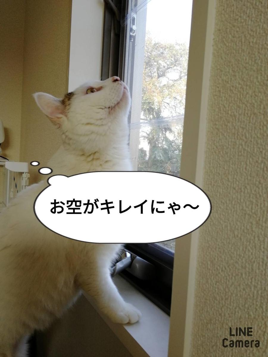 f:id:kotubutubu3253:20200503215612j:plain