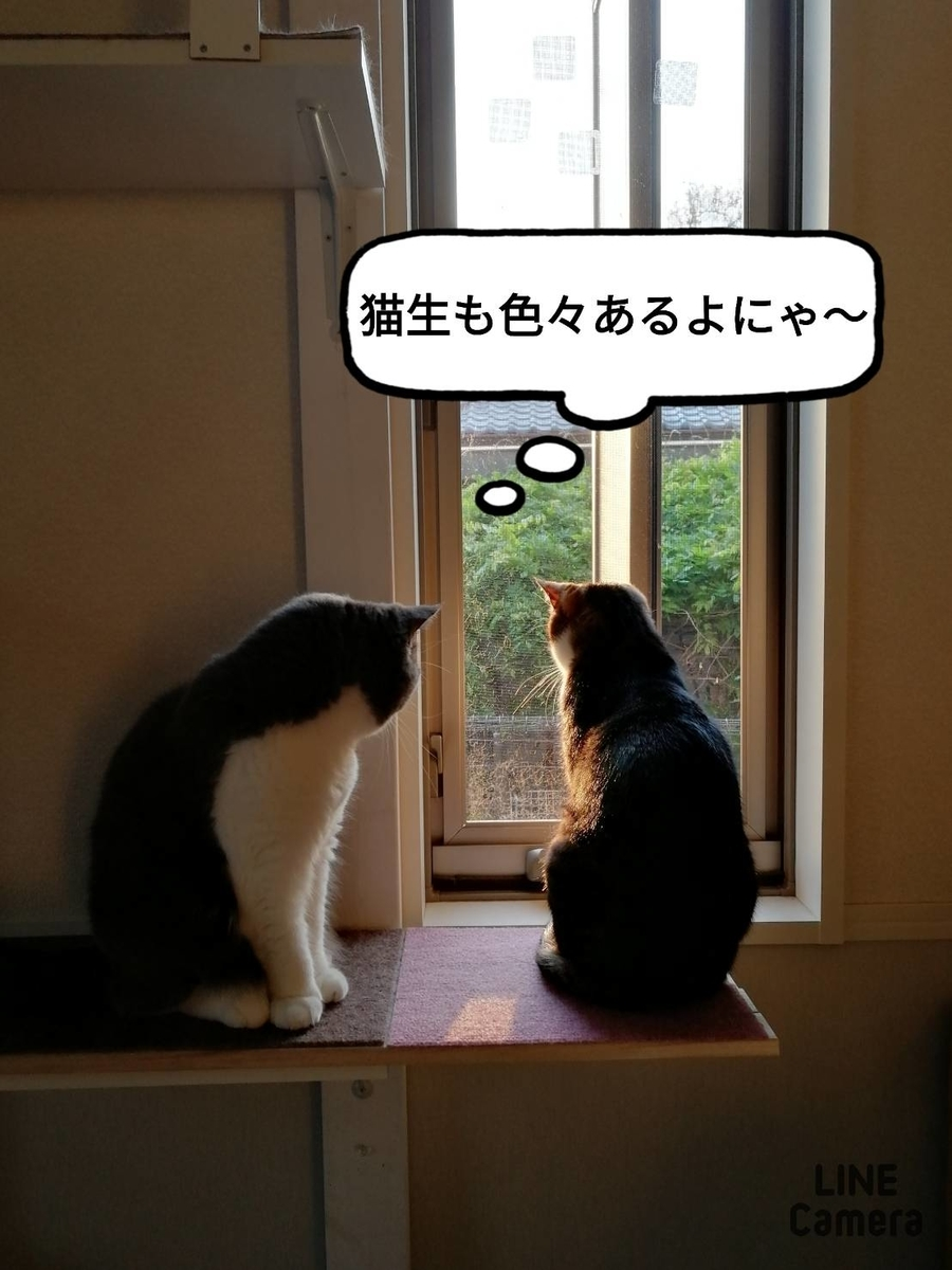 f:id:kotubutubu3253:20200508072500j:plain