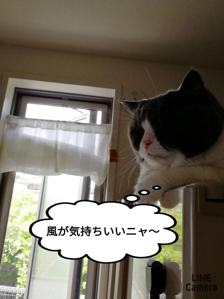 f:id:kotubutubu3253:20200516223048j:plain