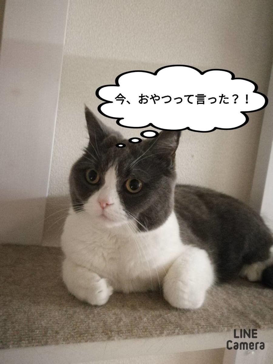 f:id:kotubutubu3253:20200518221024j:plain