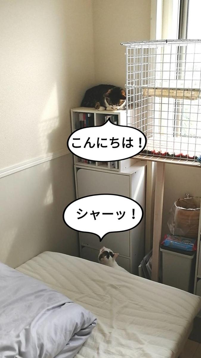 f:id:kotubutubu3253:20200604194659j:plain