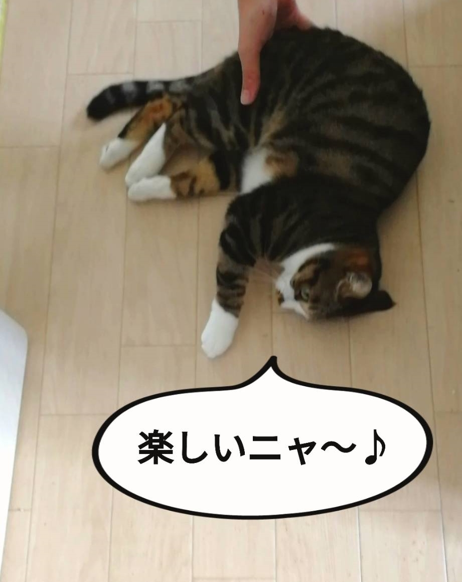 f:id:kotubutubu3253:20200627210252j:plain