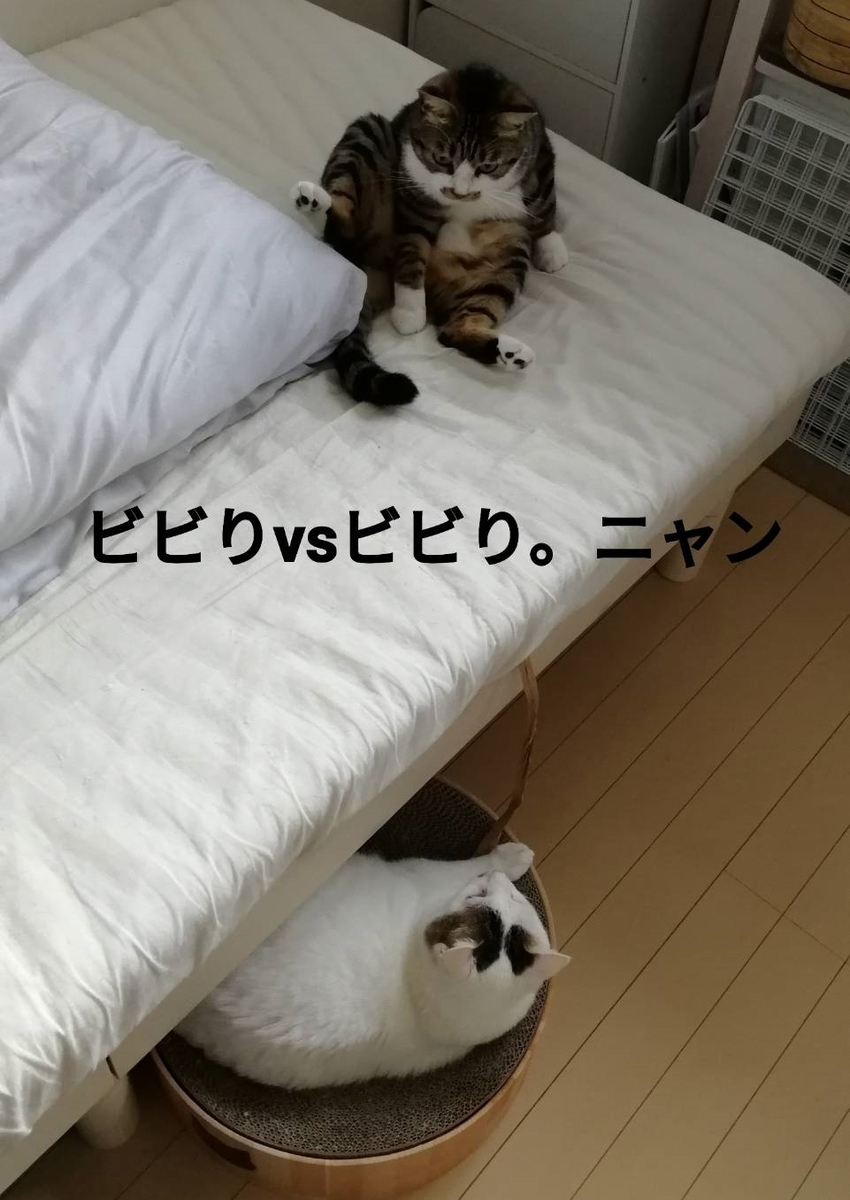 f:id:kotubutubu3253:20200630225557j:plain