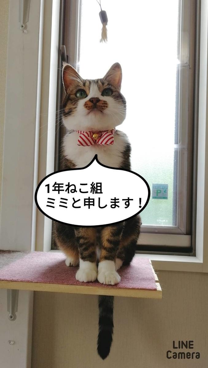 f:id:kotubutubu3253:20200715174604j:plain