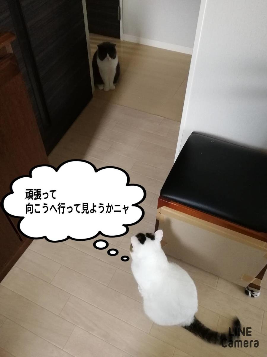 f:id:kotubutubu3253:20200726193537j:plain