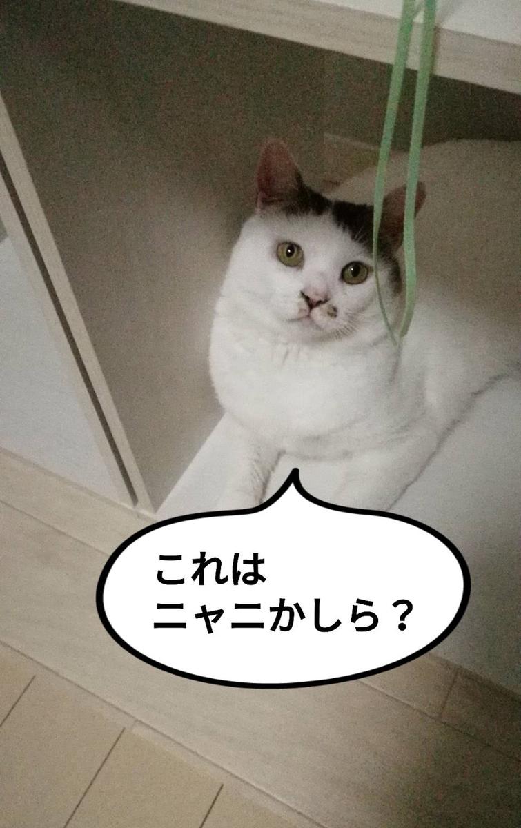 f:id:kotubutubu3253:20200805232226j:plain