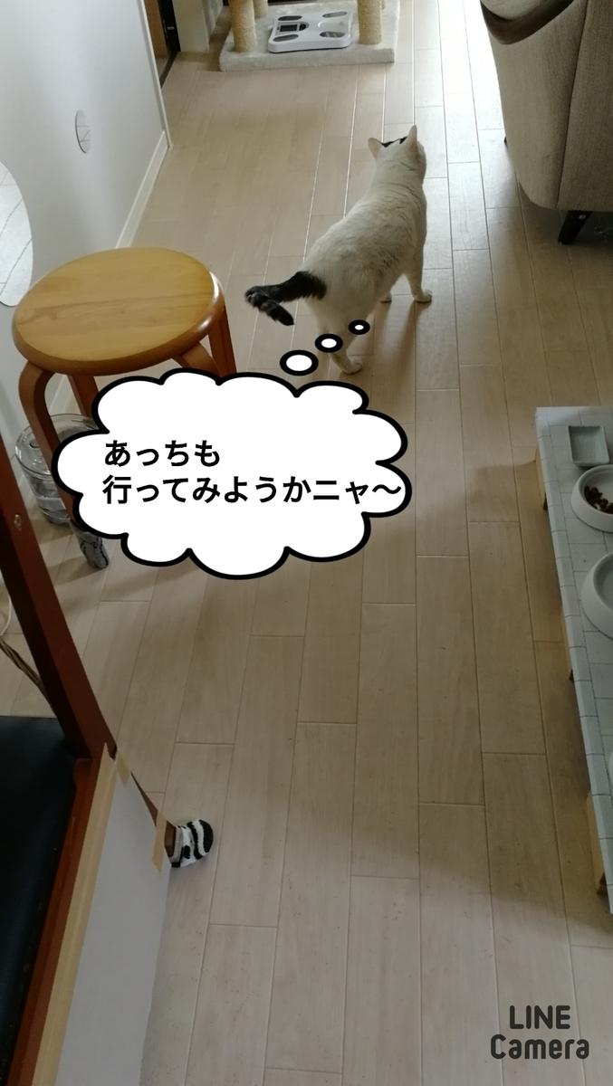 f:id:kotubutubu3253:20201112093226j:plain