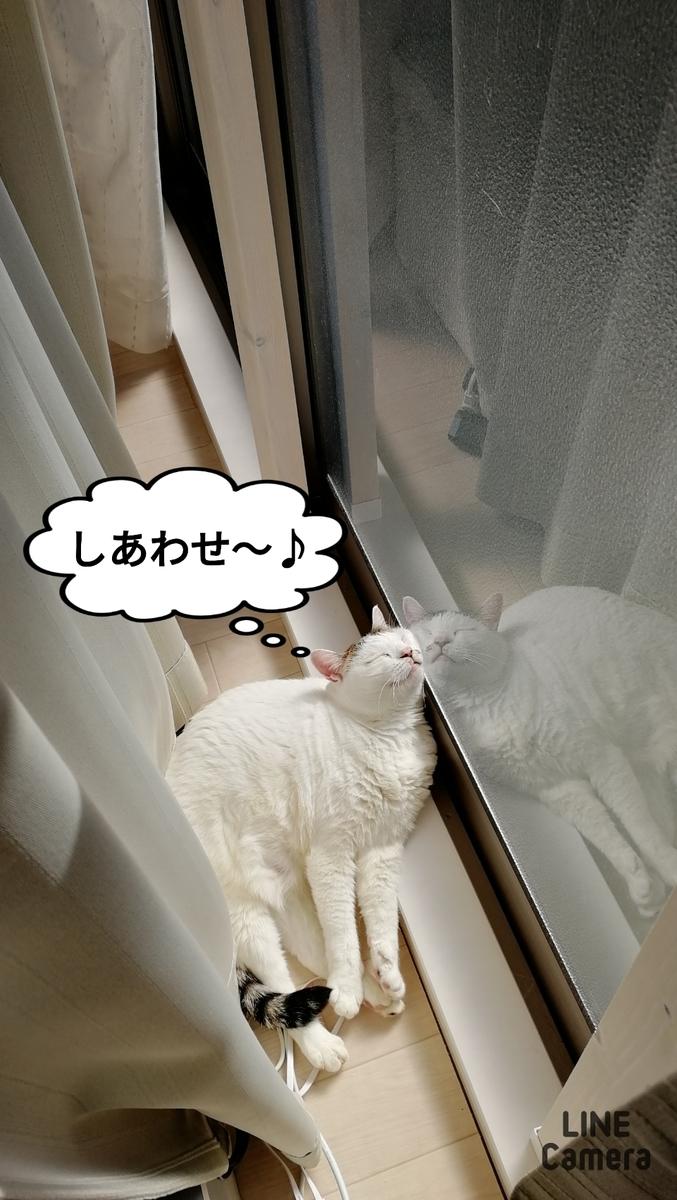 f:id:kotubutubu3253:20201114214609j:plain