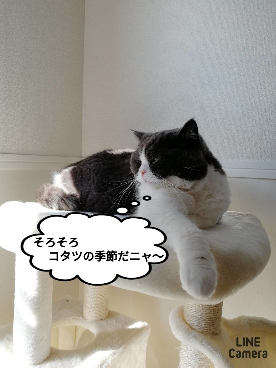 f:id:kotubutubu3253:20201125153314j:plain