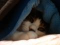 ネコ様、寒い。