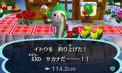 イトウ釣れました