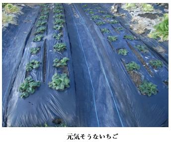 f:id:koufuku-kyouden:20210308111109p:plain