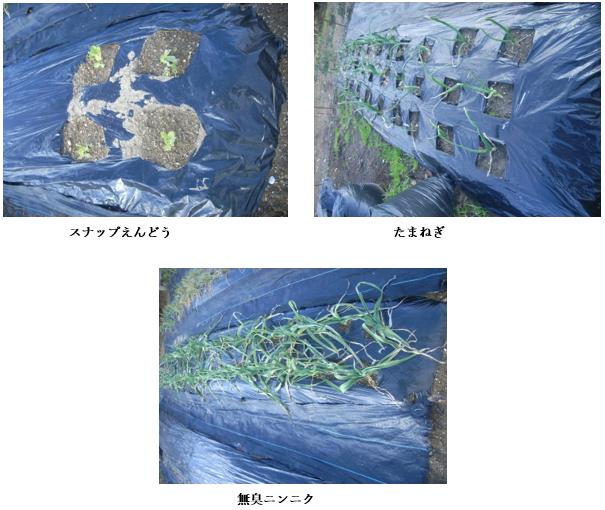 f:id:koufuku-kyouden:20210308111750p:plain