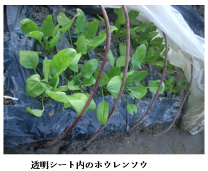 f:id:koufuku-kyouden:20210308112140p:plain
