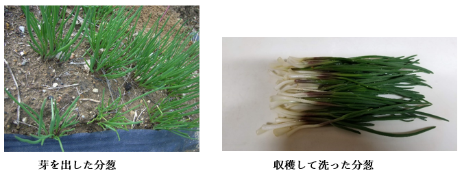 f:id:koufuku-kyouden:20210316152613p:plain