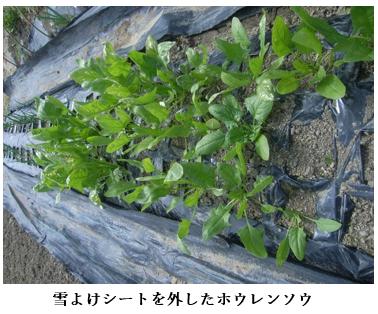 f:id:koufuku-kyouden:20210324115043p:plain