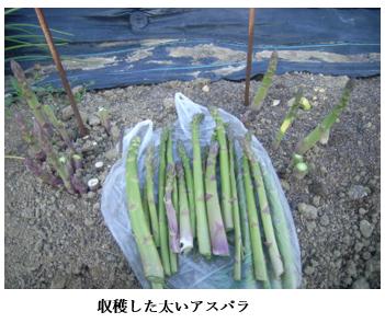 f:id:koufuku-kyouden:20210421143003p:plain