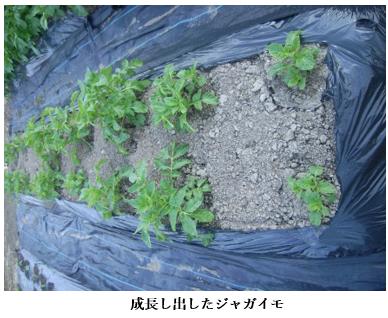 f:id:koufuku-kyouden:20210421143340p:plain
