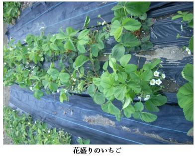 f:id:koufuku-kyouden:20210421143516p:plain