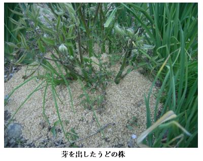 f:id:koufuku-kyouden:20210421143703p:plain