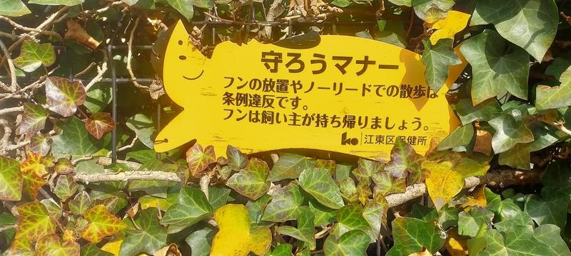 f:id:kouhokuy517:20210308231227j:plain