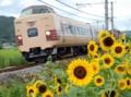 「京都新聞写真コンテスト」ヒマワリと特急電車