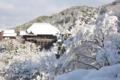 「京都新聞写真コンテスト」輝く白銀