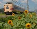 「京都新聞写真コンテスト」ヒマワリの園を行く
