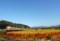 「京都新聞写真コンテスト」赤い絨毯を行く名残の特急