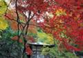 「京都新聞写真コンテスト」秋色のグラデーション
