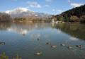 「京都新聞写真コンテスト」マガモの遊ぶ池