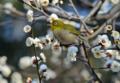 「京都新聞写真コンテスト」春の香り