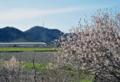 「京都新聞写真コンテスト」春の訪れ