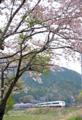 「京都新聞写真コンテスト」春の旅