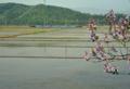 「京都新聞写真コンテスト」桐の花を行くSL回送