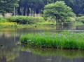 「京都新聞写真コンテスト」高原の初夏