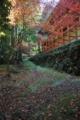 「京都新聞写真コンテスト」 秋の小道
